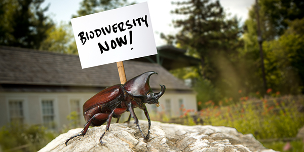 """A photograph of a beatle holding a sign that reads """"BIODIVERSITY NOW!"""" on Ambler Campus."""