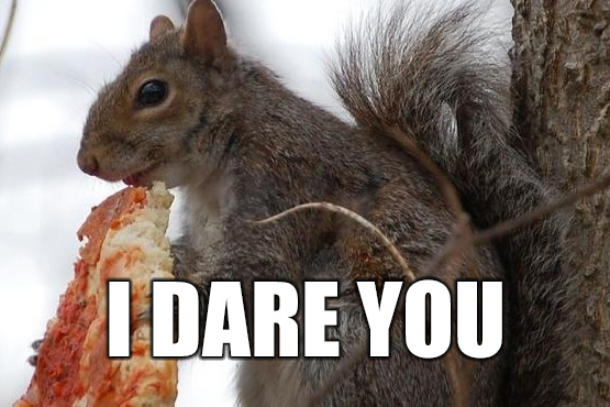 """A picture of a squirrel eating pizza. """"I Dare You"""""""