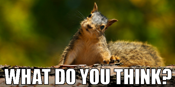 "A quizzical squirrel and text asking, ""What do you think?"""