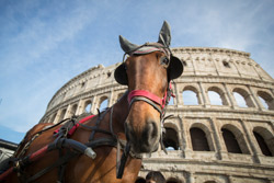 a horse in front of the Colosseum.