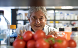 Antonio Giordano in a lab with tomatoes