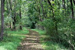 A trail at Ambler Arboretum
