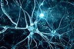 A three-dimensional scan of neurons firing inside a brain.